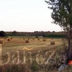 El cereal es uno de los sectores con más peso en la agricultura de la comarca.