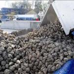 Imagen de archivo de un camión descargando remolacha en la Azucarera de La Bañeza.