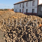 Patatas vertidas por un productor en una calle de Villamontán de la Valduerna.