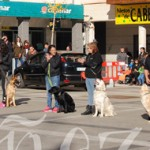En la exhibición participaron varios perros de distintas razas.