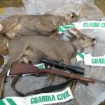 Animales decomisados por la Guardia Civil y arma con la que, presuntamente, fueron abatidos.